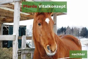Pferde Vitalkonzept - Schwerfuttrige Stute nachher2