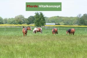 Pferde Vitalkonzept - Araber Weidehaltung