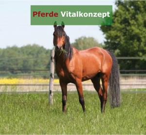 Pferde Vitalkonzept - Araber